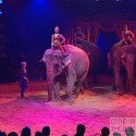 Spectacle Gruss