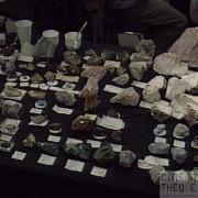 Fossilium 94 Villeneuve d'Ascq