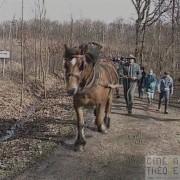 Débardage chevaux ferme pédagogique